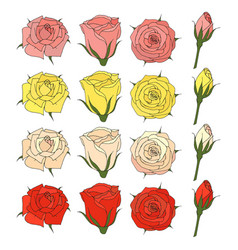 Floral collection of hand drawn elements rose vector