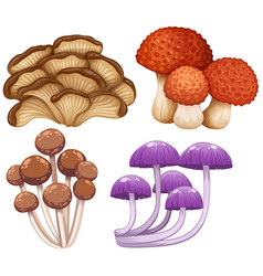 four types of wild mushrooms vector image