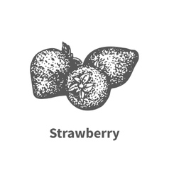 hand-drawn strawberry vector image