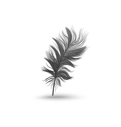 Single fluffy black feather falling or hovering vector