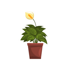 spathiphyllum indoor house plant in brown pot vector image