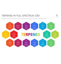 Terpenes in full spectrum cbd with structural vector
