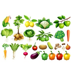 Various kind of vegetables vector