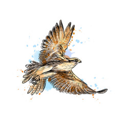 falcon in flight from a splash watercolor hand vector image