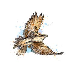 Falcon in flight from a splash watercolor hand vector