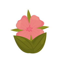 geranium flower bud with leaves vector image vector image