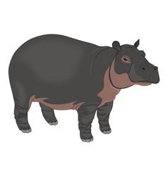 Hippopotamus or hippopotamus amphibius vector