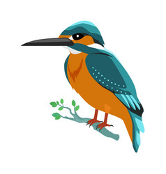 Kingfisher flat design vector