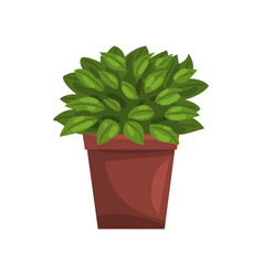 Philodendron indoor house plant in brown pot vector