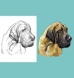 Portrait cute dog great dane vector