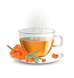 sea buckthorn tea in transparent glass cup with vector image