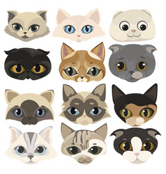 set cats face collection cartoon kittens of vector image