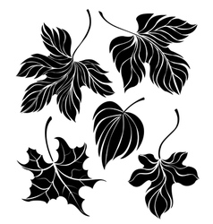 set leaves silhouette vector image