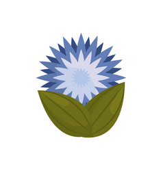star flower bud with leaves vector image vector image