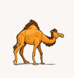 Cartoon style arabic camel on white back vector
