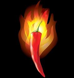 chilipepper fire vector image