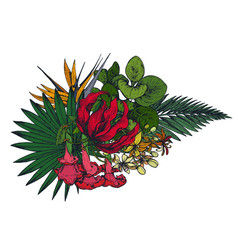 composition hand drawn tropical flowers vector image