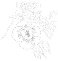 Contour hibiscus for color vector