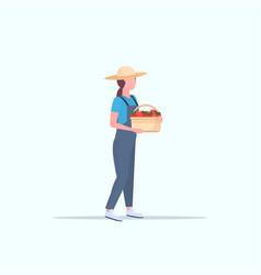 female farmer holding red ripe tomatoes basket vector image