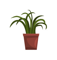 aloe indoor house plant in brown pot element for vector image