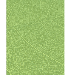 Nature background with free space for text or vector image