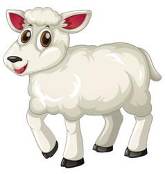 white lamb on white background vector image vector image