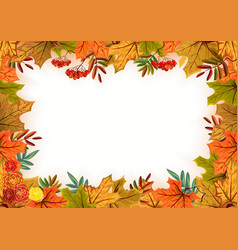 Autumn leaves rowan and flowers Template frame vector image vector image