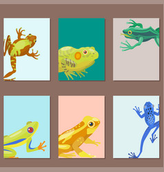 Frog cartoon tropical animal cartoon nature cards vector