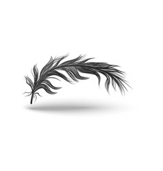 Black bird feather isolated on white background vector