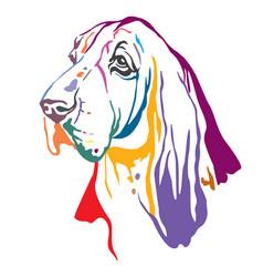 Colorful decorative portrait basset hound vector