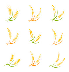ear spike logo badge icon wheat isolated vector image vector image