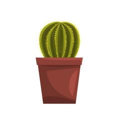 cactus indoor house plant in brown pot element vector image vector image