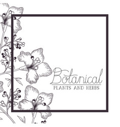 Botanical label with plants and heres vector