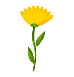 calendula flower icon cartoon style vector image