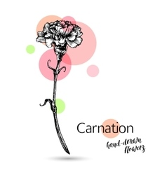 Carnation flower for wedding or birthday card vector