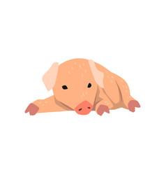 Cute cartoon little pig lying on the floor vector