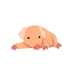 cute cartoon little pig lying on the floor vector image