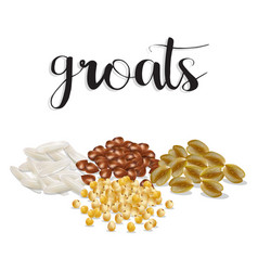 groats rice buckwheat oatmeal millet set vector image