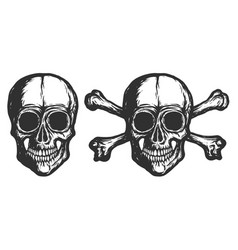 new skulls - isolated -2019 vector image