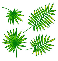 palm leaf set on white background vector image