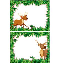 set of deer in nature frame vector image