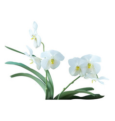 White orchid plant with flowers vector