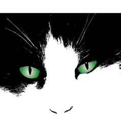 cats eyes design vector image vector image