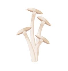 different mushrooms champignon of vector image