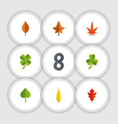 Flat icon leaves set of maple aspen hickory and vector
