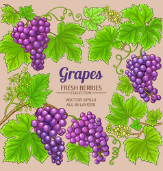 grapes branches frame on color background vector image