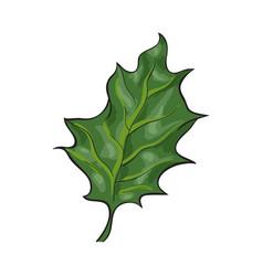 hand drawn green mistletoe leaf xmas decoration vector image