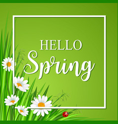 hello spring banner with grass and flower vector image