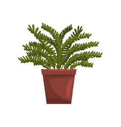 maidenhair indoor house plant in brown pot vector image vector image