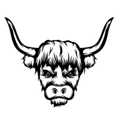 bison with long horns vector image